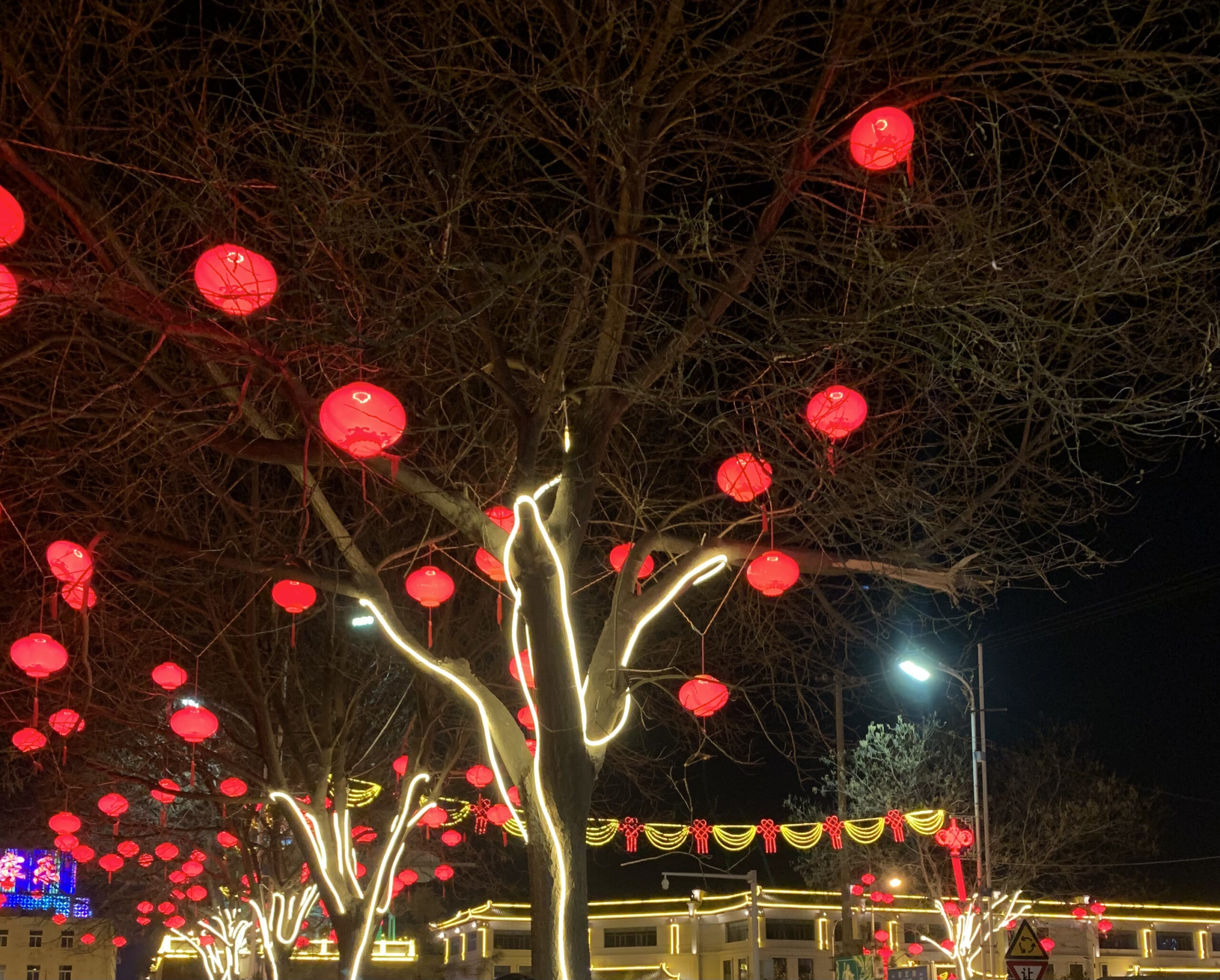 large tree with string lights and paper lanterns at night