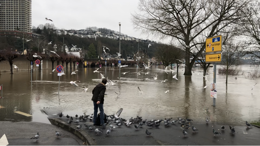 man near body of water with bridge and birds and trees
