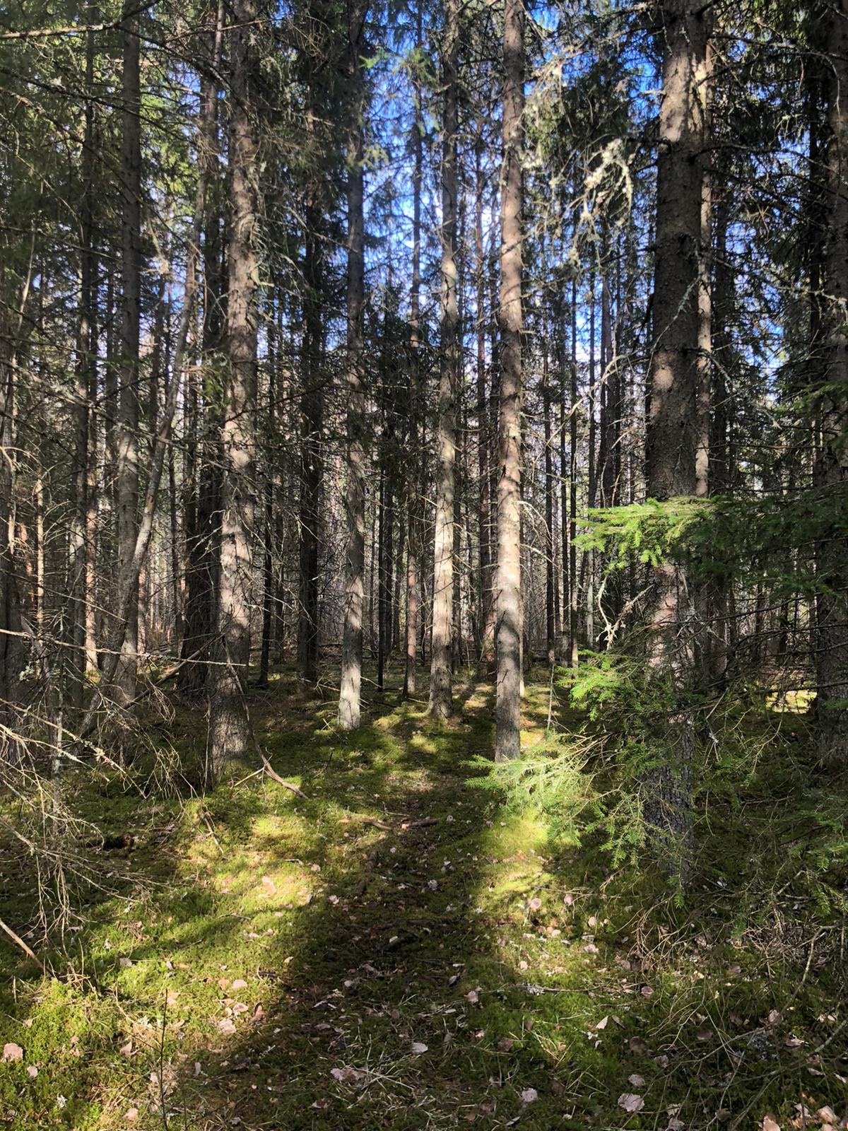 shadow in forest during daytime