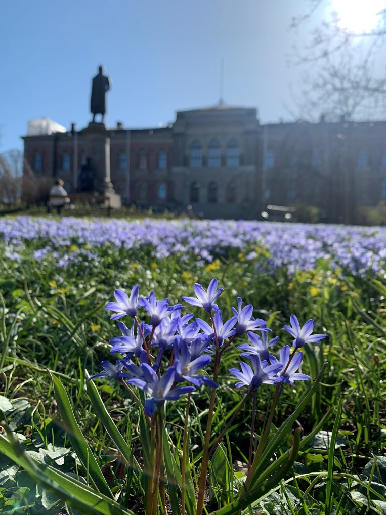 purple flowers near building during daytime